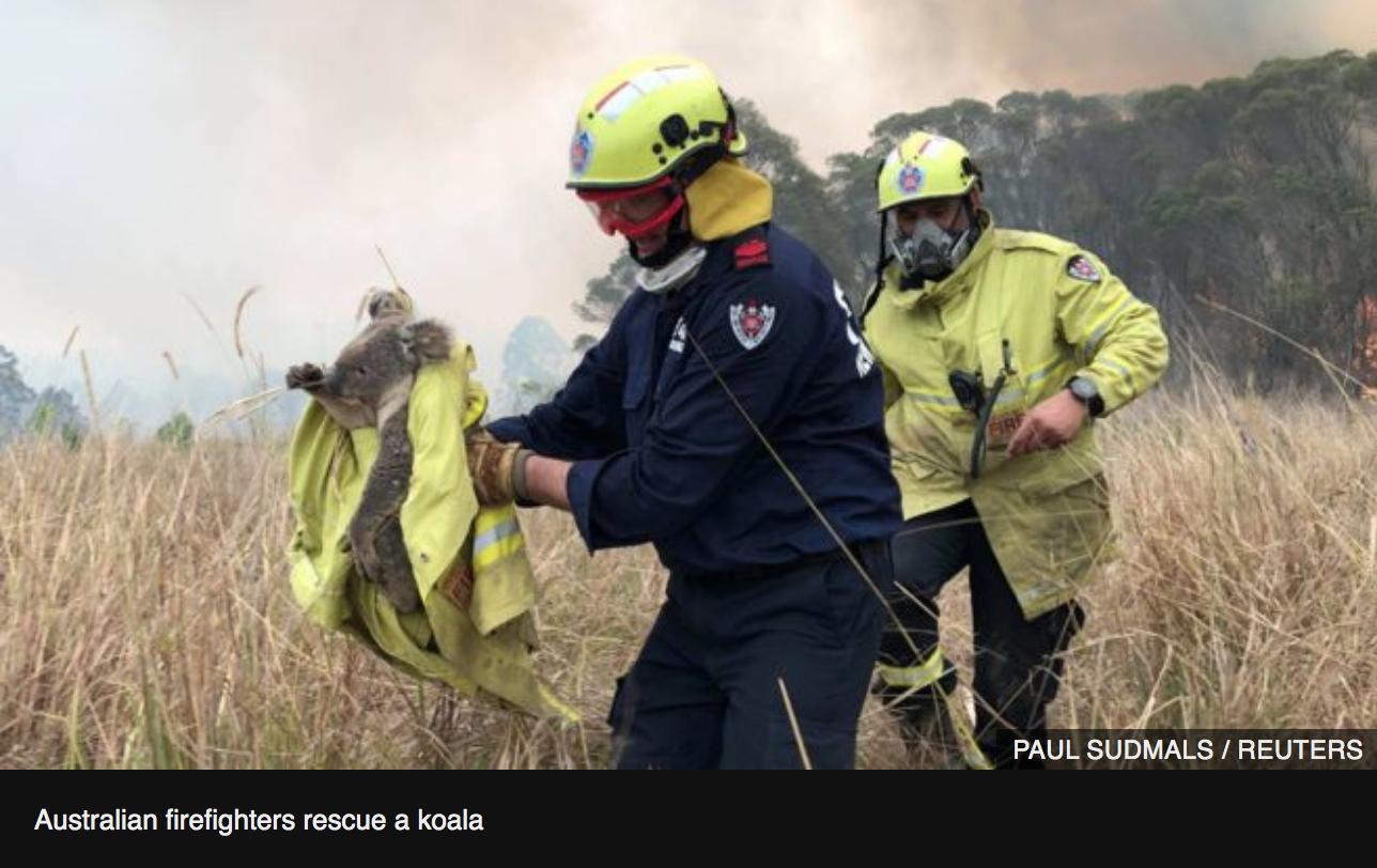 火事 コアラ 山 オーストラリア